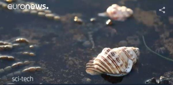 escargots de mer tueur de cancer